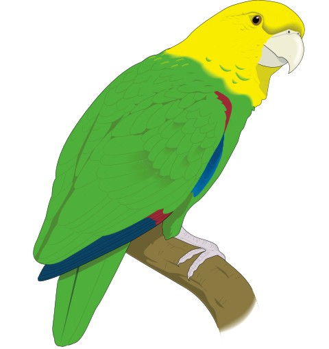 papagei aufkleber