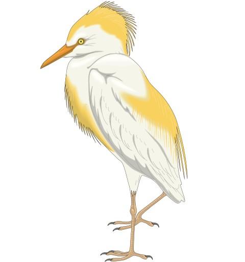 reiher vogel aufkleber