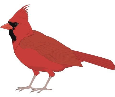 rotkardinal aufkleber
