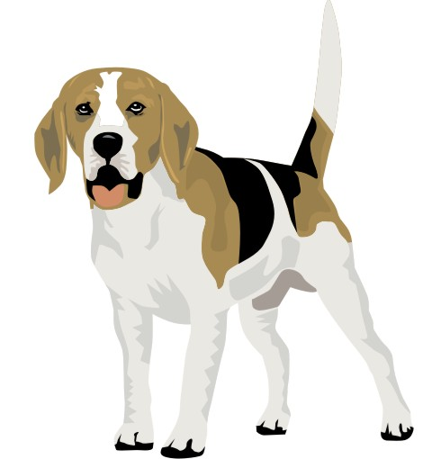 beagle wandtattoo