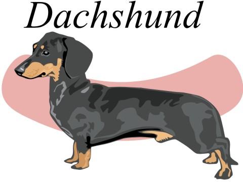 dachshund wandtattoo