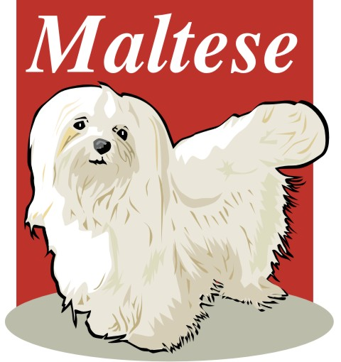 malteser wandtattoo