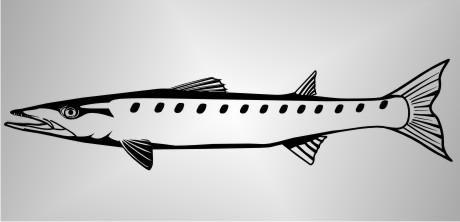 fisch autoaufkleber barracuda
