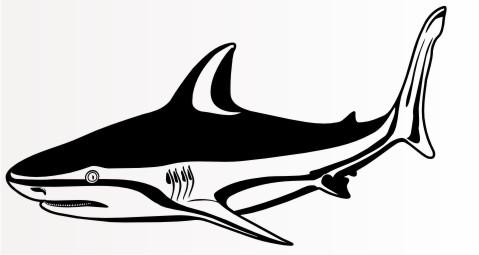bull shark hai autoaufkleber