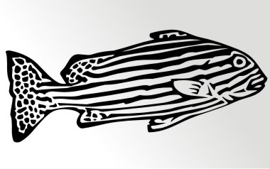 zebrafisch autoaufkleber